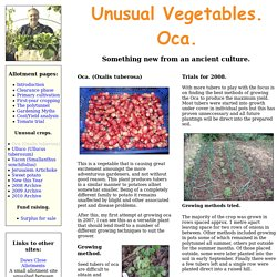 Unusual Vegetables. Oka.