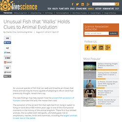 Unusual Fish that 'Walks' Holds Clues to Animal Evolution