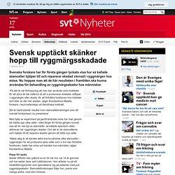 Svensk upptäckt skänker hopp till ryggmärgsskadade
