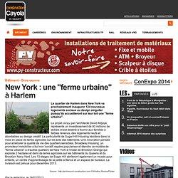 "New York : une ""ferme urbaine"" à Harlem"