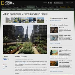 Urban Farming Is Growing a Green Future