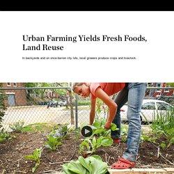 Urban Farming Yields Fresh Foods, Land Reuse