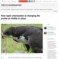 How rapid urbanisation is changing the profile of wildlife in cities