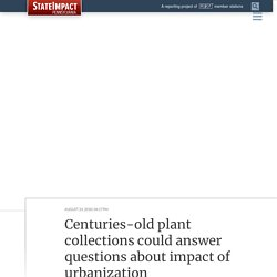 Megalopolis: Centuries-old plant collections answer questions on impact of urbanization