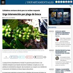 LA PRENSA (NI) 02/06/16 Cafetaleros enviaron alerta pero no reciben respuesta - Urge intervención por plaga de broca