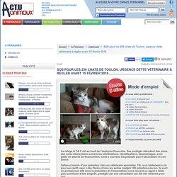 SOS pour les 250 chats de Toulon, urgence dette vétérinaire à régler avant 15 février 2016