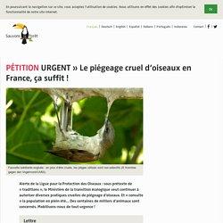URGENT » Le piégeage cruel d'oiseaux en France, ça suffit!