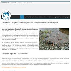 URGENT : Appel à témoins pour 11 chiots noyés dans l'Aveyron