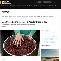 U.N. Urges Eating Insects; 8 Popular Bugs to Try