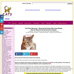 Cat Urine: Clean & Remove Cat Urine in Carpet  FREE Recipe