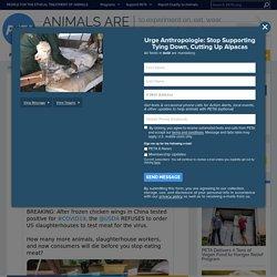 PETA 17/08/20 Breaking: USDA Is Failing to Test Animal Flesh for Coronavirus
