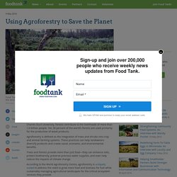 Using Agroforestry to Save the Planet