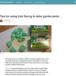 Tips for using Irish Spring to deter garden pests