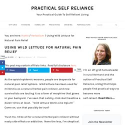 Using Wild Lettuce for Natural Pain Relief