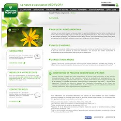 L'Arnica - Plante utilisée pour soulager douleurs, inflammations et piqures d'insectes