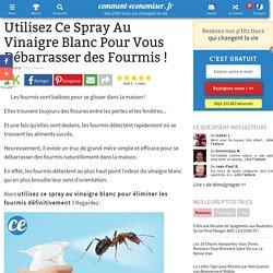 Utilisez Ce Spray Au Vinaigre Blanc Pour Vous Débarrasser des Fourmis !