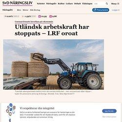 Utländsk arbetskraft har stoppats – LRF oroat