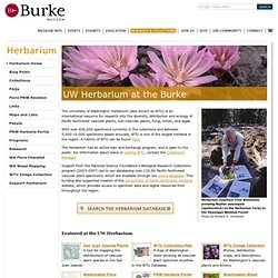 UW Herbarium at the Burke - Burke Museum