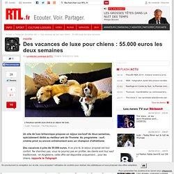 Des vacances de luxe pour chiens : 55.000 euros les deux semaines