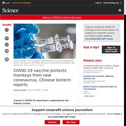 SCIENCEMAG 23/04/20 COVID-19 vaccine protects monkeys from new coronavirus, Chinese biotech reports