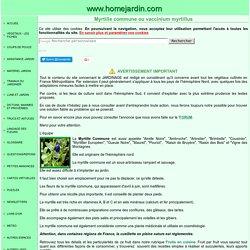Myrtille commune ou vaccinium myrtillus, fiche technique complète