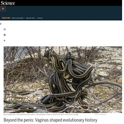 Beyond the penis: Vaginas shaped evolutionary history