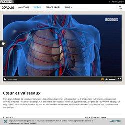 Animation - Cœur et vaisseaux - Corpus - réseau Canopé