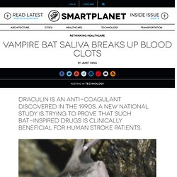 Vampire bat saliva breaks up blood clots
