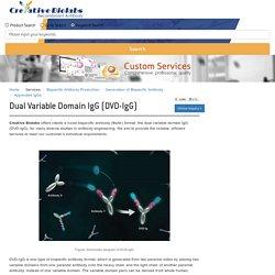 Dual variable domain IgG (DVD-IgG) - Creative Biolabs