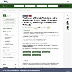 FORESTS 08/10/20 The Impact of Climate Variations on the Structure of Ground Beetle (Coleoptera: Carabidae) Assemblage in Forests and Wetlands