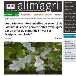 MAAF 02/05/17 Les variations interannuelles de sévérité de l'oïdium du chêne peuvent-elles s'expliquer par un effet du climat de l'hiver sur Erysiphe quercicola ?