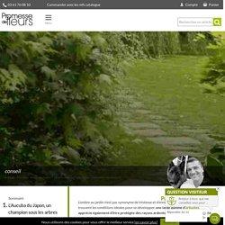 Arbuste d'ombre : 10 variétés indispensables au jardin