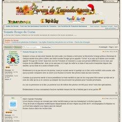 Tomate Rouge de Corse : Les Variétés de Tomates Anciennes