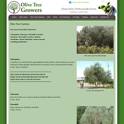Olive Tree Growers - Olive Tree Varieties - Arbequina, Frantoio, Koroneiki, Leccino, Manzanillo, Mission, Nicoise, Pendolino, Picaul