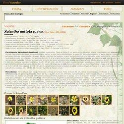 Flora Vascular - Toda la información detallada sobre la Flora Vascular