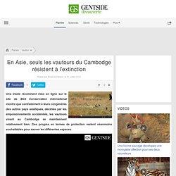 Video - En Asie, seuls les vautours du Cambodge résistent à l'extinction