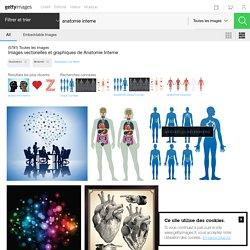 Images Vectorielles Et Graphiques De Anatomie Interne
