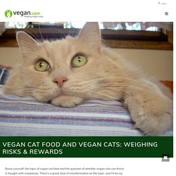 Cat Food and Vegan Cats: Weighing Risks & Rewards - Vegan.com