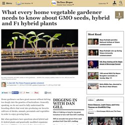 What every home vegetable gardener needs to know about GMO seeds, hybrid and F1 hybrid plants