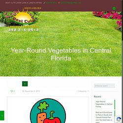 Vegetables Can Grow Year-Round in Central Florida