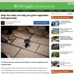 Eddy the robot can help you grow vegetables hydroponically