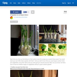 10 Vegetables You Can Regrow Indoors