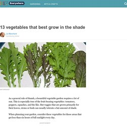 13 vegetables that best grow in the shade