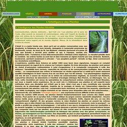 Monde Végétal -> Botanique -> L'Intelligence des Plantes