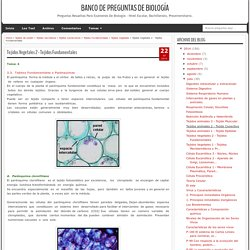 Tejidos Vegetales 2 - Tejidos Fundamentales - Banco de Preguntas de Biología