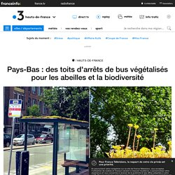 Pays-Bas : des toits d'arrêts de bus végétalisés pour les abeilles et la biodiversité
