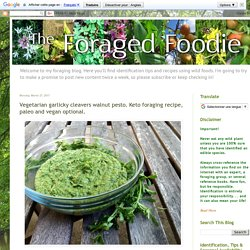 The Foraged Foodie: Vegetarian garlicky cleavers walnut pesto. Keto foraging recipe, paleo and vegan optional.