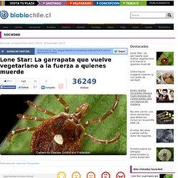 Lone Star: La garrapata que vuelve vegetariano a la fuerza a quienes muerde