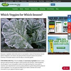 Which Veggies for Which Season? - Bonnie Plants