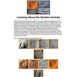 Vendian Animals
